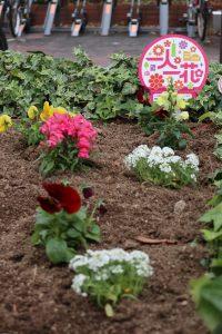 花植え2(サイズ変更)